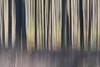 Spring forest (Monique vd Hoeven) Tags: trees movement belgie ardennen bos icm voorjaar thierache woold intentionalcameramovement regniessart
