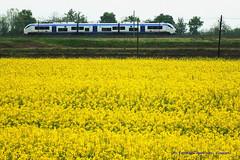 Viaggiare.. (Ferruccio Zanone) Tags: treno littorina