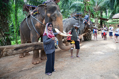 Elephant Trekking (king.arm) Tags: trip travel sea vacation holiday elephant beach water thailand island boat amazing interesting crystal getaway speedboat tuktuk siam longtail krabi aonang