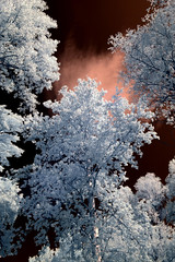 (AB-) Tags: ir nikon serbia infrared vojvodina 665nm d3100 infracrvenafotografija
