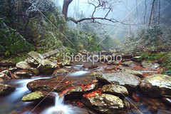 Small-streams (MPBHAIBO) Tags: china longexposure winter mountain snow cold tree green ice nature wet rock horizontal stone forest river outdoors waterfall moss stream day guilin condensation lichen flowing scenics fallingwater defocused blurredmotion flowingwater colorimage ruralscene beautyinnature