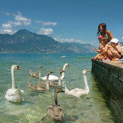 Children love feeding swans at Lake Garda (Bn) Tags: park blue summer vacation sky italy lake holiday mountains colour water weather sport rock kids del clouds swimming children landscape fun coast carved swan divers garda mediterranean italia waves sailing feeding wind unique air dive scuba diving kitesurfing snorkeling clear swans windsurfing fjord relaxation shape majestic topf100 climate sunbathing gem warship sunbather turbulence torri gardameer lakegarda freshwater discover 100faves bresciano altogarda largestlake benato
