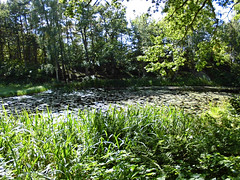 pond (Charly Hund) Tags: sweden summer green water pond