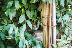 Today's Cat@2016-08-16 (masatsu) Tags: cat catspotting thebiggestgroupwithonlycats pentax mx1