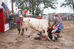 "Bull4 • <a style=""font-size:0.8em;"" href=""http://www.flickr.com/photos/69387132@N07/28472243533/"" target=""_blank"">View on Flickr</a>"