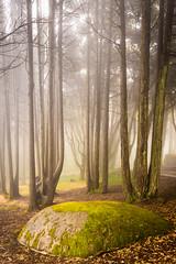 The Boulder & the Fog (Hugo Carvoeira) Tags: green sintra portugal trees forest magical peninha bosque arvores rocha rock boulder nature