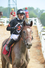 201608-21 (16) r7 over and the horses returned to the paddock - Jevian Toledo rode #1 Rollin Warrior (JLeeFleenor) Tags: photos photography md maryland marylandracing marylandhorseracing jockey   jinete  dokej jocheu  jquei okej kilparatsastaja rennreiter fantino    jokey ngi horses thoroughbreds equine equestrian cheval cavalo cavallo cavall caballo pferd paard perd hevonen hest hestur cal kon konj beygir capall ceffyl cuddy yarraman faras alogo soos kuda uma pfeerd koin    hst     ko  laurelpark