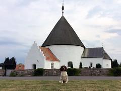 35/52 ZigZag 2016 (Flemming Andersen) Tags: 52weeksfordogs dog hund rundkirke church