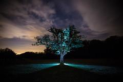 Santa Franca (FiPremo) Tags: albero notte stelle stars piacenza santa franca