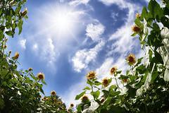 Summer Days -25- (snopan_) Tags: sony7iiilce7m2 sigma15mmf28exdgdiagonalfisheye club16 fisheye
