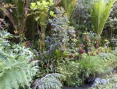 038 (Daniel Menzies) Tags: plants fern palm stream water nature forest garden subtropical bromeliad tree treefern ponga