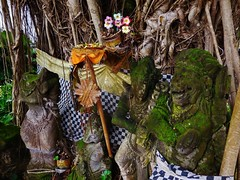 Balinese tree shrine (SM Tham) Tags: asia indonesia bali karangasem amlapura tamanujong waterpalace watergardens ficus banyan tree shrine statues offerings flowers moss culture religion outdoors stonecarvings