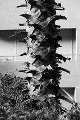 new minimalism (Rodrigo Uriartt) Tags: new minimalism minimal bw mono palm haifa israel building fujifilm xpro1