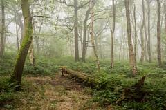 Overcome (Aidan Mincher) Tags: woodland wood trees tree green canon5dmk3 fog mist uk yorkshire southyorkshire