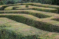 Maze Hedges (ClydeHouse) Tags: bridgeendgarden italianrenaissance hedgemaze byandrew essex safffronwalden gradetwolisted garden gibsonfamily maze