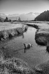 Which stone did you throw again? (brookis-photography) Tags: dog farchant bavaria river water stones throwing mountains blackandwhite