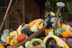 Herbstzeit - Krbiszeit (ingrid eulenfan) Tags: herbst herbstmarkttage krbis dekoration pumpkin autumn