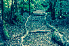 Follow The Path (Nomis.) Tags: canon eos 700d t5i rebel canon700d canoneos700d rebelt5i canonrebelt5i sk201609150634raweditlr sk201609150634 woods pathway path wood forest leaves tree trees cheshire alderleyedge alderley edge theedge niftyfifty fifty nifty raw