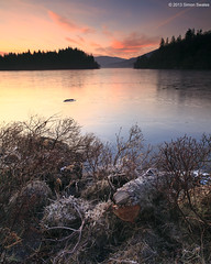 H'ard wood (SwaloPhoto) Tags: winter sunset ice zeiss forest reflections scotland nationalpark frost shadows silhouettes shore lochlomond forestpark queenelizabeth gloaming stirlingshire lochard leefilters distagon2128ze distagont2821ze andtrossachs