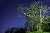 Starry Tree (Raven Photography by Jenna Goodwin) Tags: night stars photography star university minolta sony flash clear lit alpha speedlight keele noctography Astrometrydotnet:status=failed Astrometrydotnet:id=alpha20130410896645