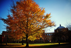Golden tree (Ro Rana) Tags: autumn tree birmingham university