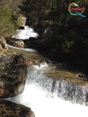 Primavera (Historia de Covaleda) Tags: espaa spain fiesta paisaje douro pinos soria historia pinar tradicion duero covaleda
