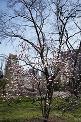 IMG_5871 (Illuzie) Tags: newyork spring centralpark manhattan canon24105f4 canon6d