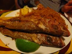 The Fish Fry (#7887) (Kordian) Tags: macro gps bahamas nassau fishfry highiso mp6 tripsvacations canonpowershots100 201301 latinsouthamerica