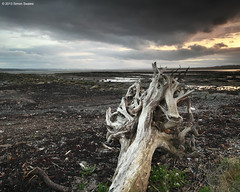 Wasting Light (SwaloPhoto) Tags: light sunset coast scotland fife album estuary driftwood coastal northsea foo weathered fighters wasting firthofforth bythesea leefilters crombiepoint canoneos5dmkii distagont2821ze