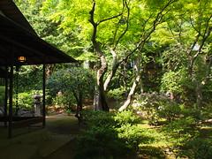 P4291436.JPG (abiys730804) Tags: tokyo furukawateien 2013 eyefi 20130429