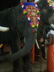 koodalmanikyam utsavam 2013 shiveli23 (koodalmanikyam-utsavam) Tags: elephant utsavam irinjalakuda koodalmanikyam irinjalakudautsavam shiveli koodalmanikyamtemple koodalmanikyamutsavam2013 koodalmanikyamutsavamphotos