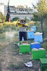 [_ Honey Bee, Come Buzzing Me _]