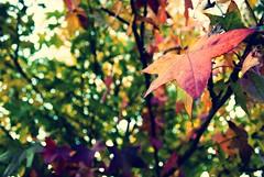 Colores (Rodrigo Aguirre - Fotografas) Tags: sunset portrait orange naturaleza sun flower macro reflection verde green primavera colors yellow 35mm photography luces mar photo nikon flickr day photos bokeh retrato flor playa colores explore amarillo cielo reflejo contraste otoo jpg da naranja fotgrafo sum brillo encuadre d90 18g 2013