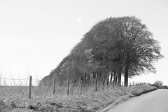 Line of sight (TempusVolat) Tags: bw white black landscape open space horizon wide swindon fields bleak gareth tempus volat wonfor mrmorodo garethwonfor tempusvolat