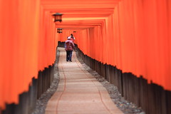 (A Sutanto) Tags: orange japan kyoto shrine inari gates path shinto torii pathway fushimi