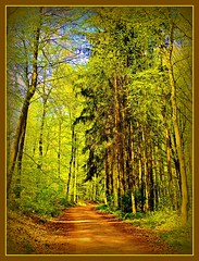 Peace in the Forest  -  Idylle im Wald (FotoArtCircle) Tags: spring peace frieden wald springtime frhling idylle waldweg