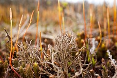 Moss and lichen (ushishir) Tags: suttonpark