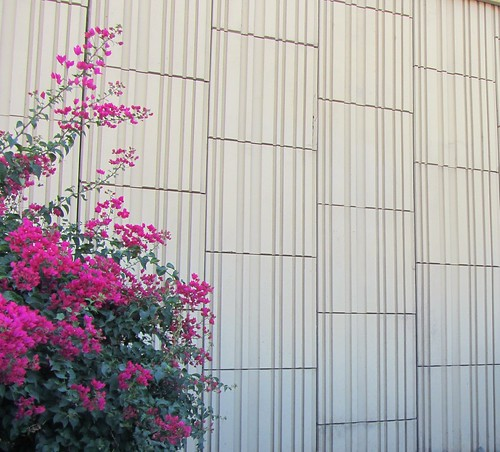 Vertical Lines on a Wall with Pink Flowers.