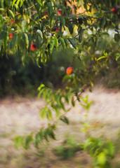 peaches (Valentyn Kolesnyk (ValeKo)) Tags: nature pentax k3 light line landscape