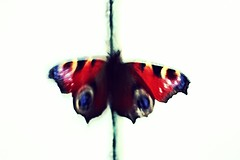 Watercolour (tasj) Tags: butterfly vlinder dagpauwoog arty