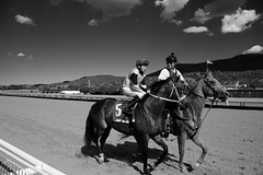 Heading to the gate (DanJBailey) Tags: ruidosodowns horseracing racetrack monochrome blackandwhite newmexico nm ruidoso downs horse horses thoroughbred race racing canon 60d