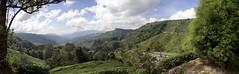 Boh tea plantation - Cameron Highlands Panorama (Ben Varley) Tags: cameron highlands malaysia tea teh plantation agriculture ipoh travel farming panorama panoramics cameronhighlands hills beautiful vast
