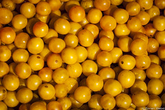 Wild yellow plums (Zoran Babich) Tags: plum plums yellow fruit fruits