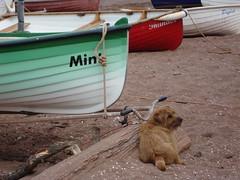 Mint, Thunder, Piglet & ..... (Balticson) Tags: boats dogs seaside coast teignmouth devon sand