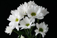 Flowers (padge83) Tags: nikon d5300 flowers white westyorkshire macro bunch petals