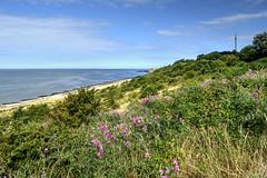 Herne Bay Downs (Aliy) Tags: hernebay downs thedowns hernebaydowns kent coast seaside sea beach wildflowers cliff cliffs