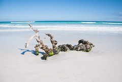 Lost at sea (LynxDaemon) Tags: perfectbeach whitesand white sand beach ocean blue driftwood impressive publicity shot