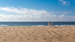 El vigilante de la Playa (The eclectic Oneironaut) Tags: 2016 6d canon eos familia portugal summer dog perro vigilante socorrista canonef24105mmf4lisusm baywatch