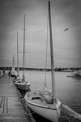 Wooded boat   (T.ye) Tags: boat boating deck pier wood monochrome contrast seagull blackandwhite texture