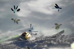 e giocano ancora (conteluigi66) Tags: luigiconte acqua fiume lago donzelle donzella ala ali volare ronzare alghe alga acquatico ombra ombre roflesso riflessi specchio specchiare figura